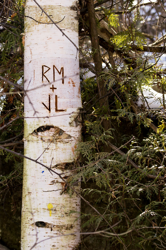 initials in the tree, Cambridge Ontario
