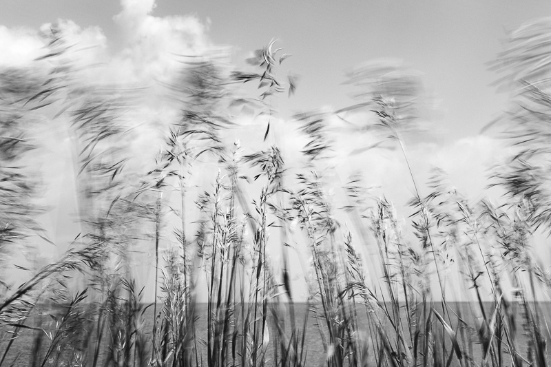Beach grass in the wind (1 of 1).jpg